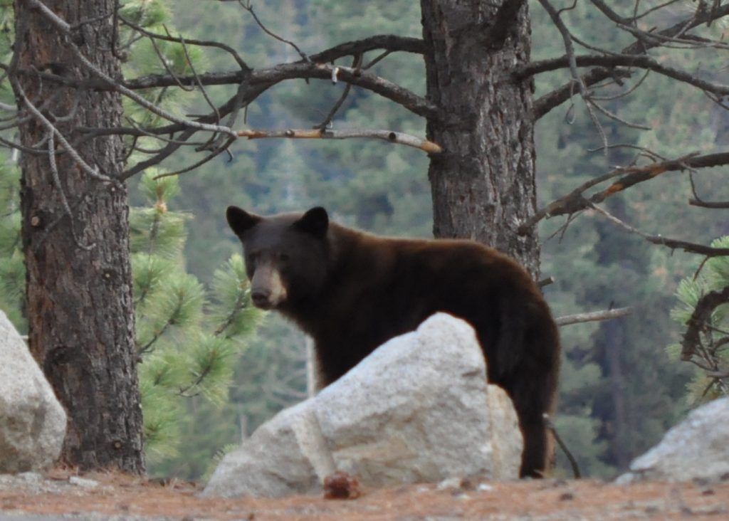 Young bear down the street from my house